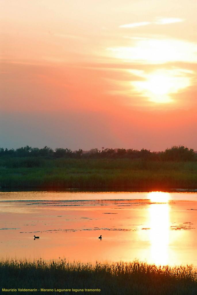 (Maurizio Valdemarin)  Marano lagunare laguna tramonto anatra- with ©